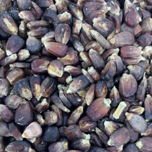 TEXMALT -Texas Jimmy Red Corn Malt